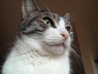ネコちゃんの年.jpg
