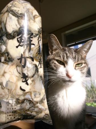 牡蠣とまめ.jpg