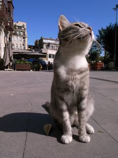 j街角猫1.jpg