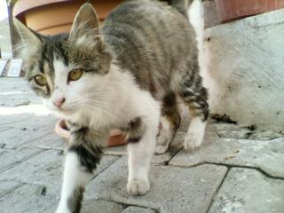 j街角猫5.jpg