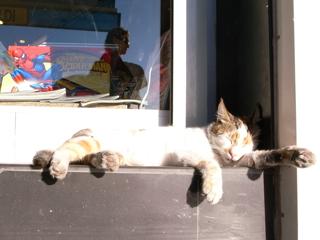 j街角猫6.jpg