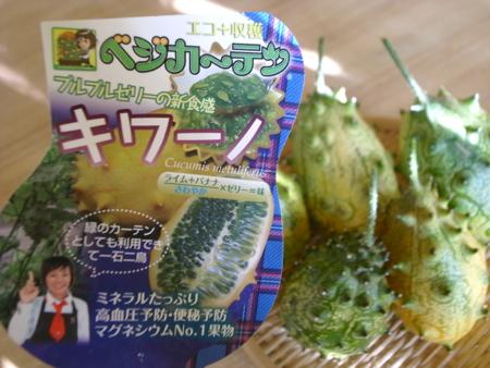 キワーノ収穫ついに。4.jpg