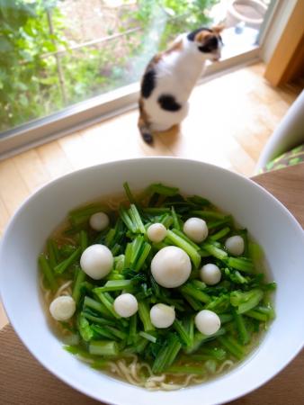 サラダかぶ正麺1.jpg