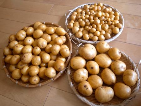 ジャガイモ勘定2.jpg