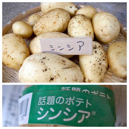 ポテト10種の成果1.jpg