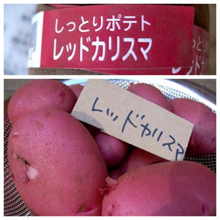 ポテト10種の成果4.jpg