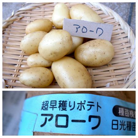 ポテト10種の成果5.jpg