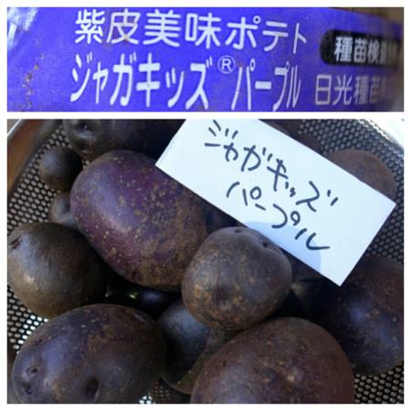 ポテト10種の成果6.jpg