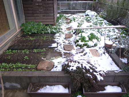 初積雪.jpg