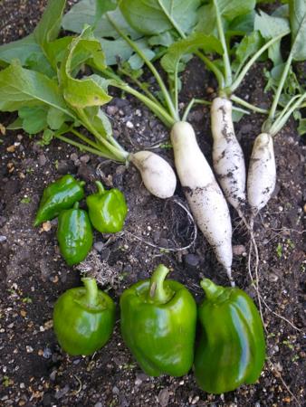 収穫3種1.jpg