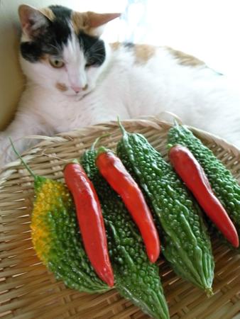 収穫とちょめ21.jpg