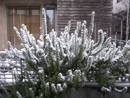 大雪!1.jpg