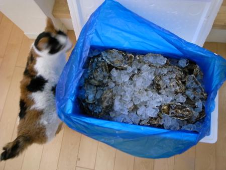 松島の牡蠣1.jpg