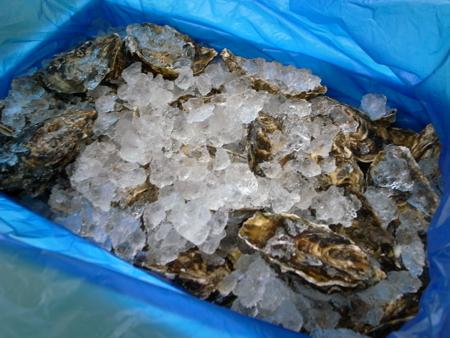松島の牡蠣2.jpg