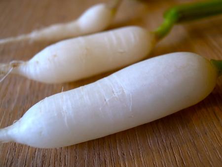 白姫はつか大根の収穫1.jpg