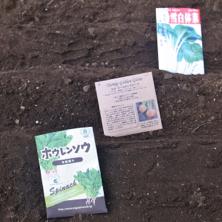 種まき2013秋1.jpg
