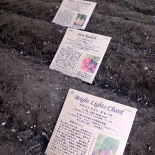 種まき2013秋2.jpg