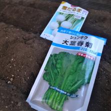 種まき2013秋3.jpg