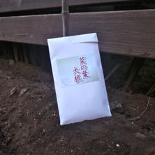 種まき2013秋4.jpg