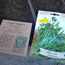 種まき2013秋6.jpg