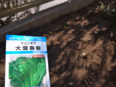 種まき春菊ほうれん草1.jpg