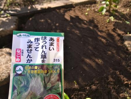 種まき春菊ほうれん草2.jpg