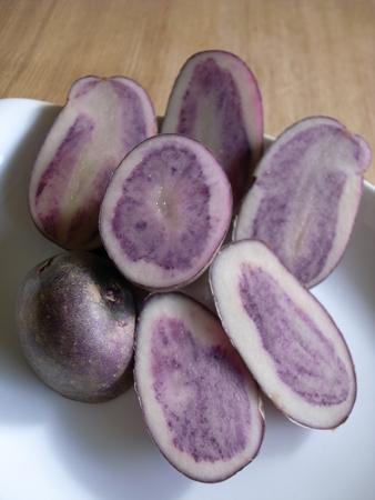 紫グループ.jpg