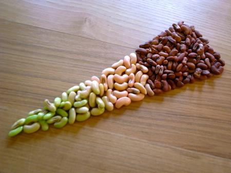 赤種三尺豆で2.jpg