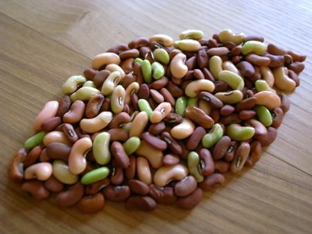 赤種三尺豆で3.jpg