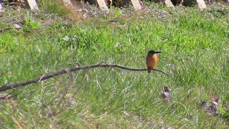 野鳥5.jpg