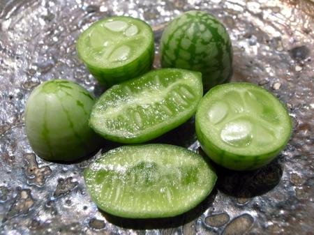 wild-cucumbers11.jpg