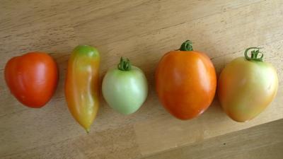 トマトたち.jpg