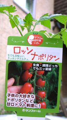 2012夏の苗3.jpg