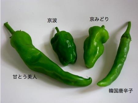 ミドリ4種.jpg