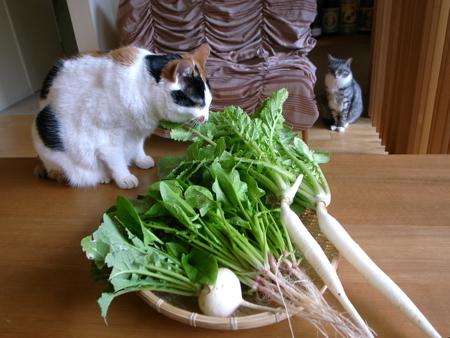 朝どり野菜2.jpg