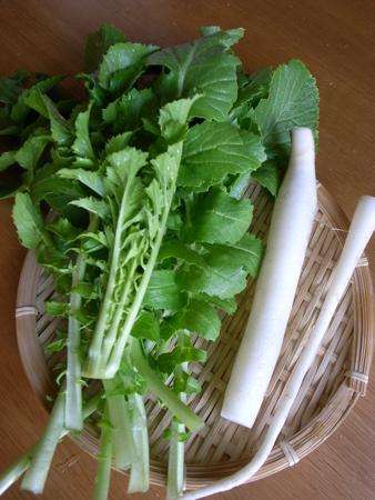 朝どり野菜3.jpg