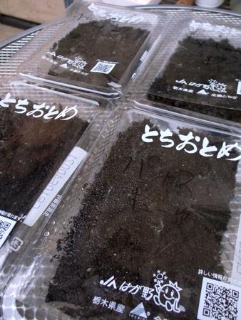 種まき容器1.jpg