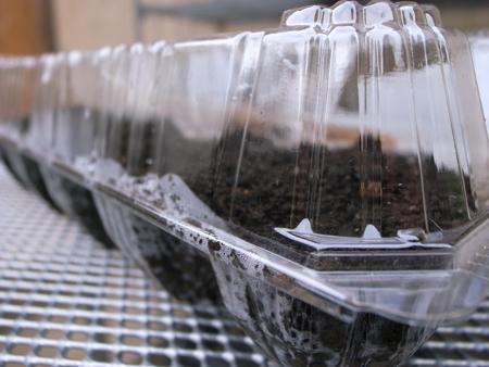 種まき容器2.jpg