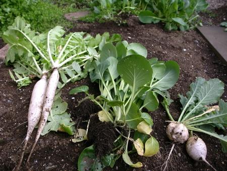 野菜③種.jpg